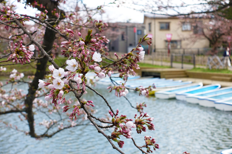 弘前公園 西濠 ボートのりば