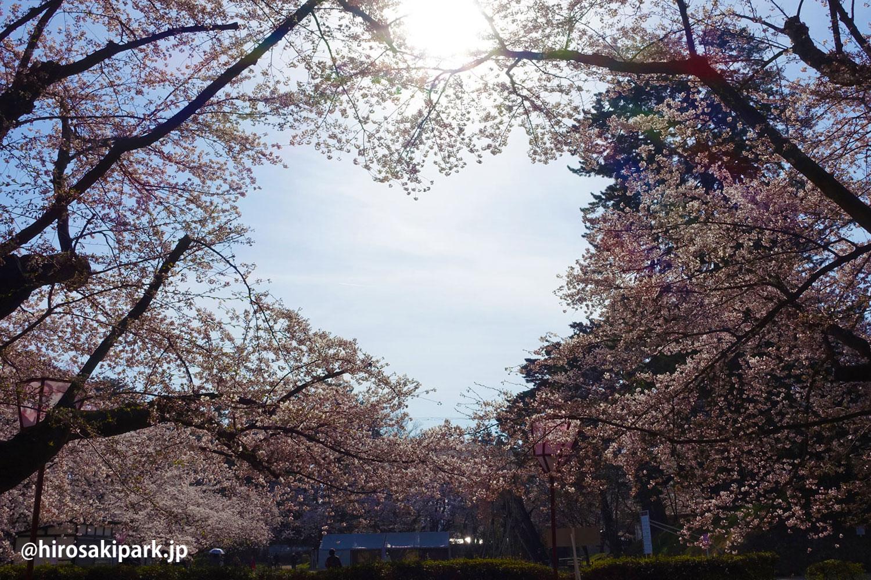 弘前公園 ハート 桜
