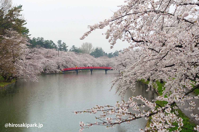 弘前公園 西濠付近