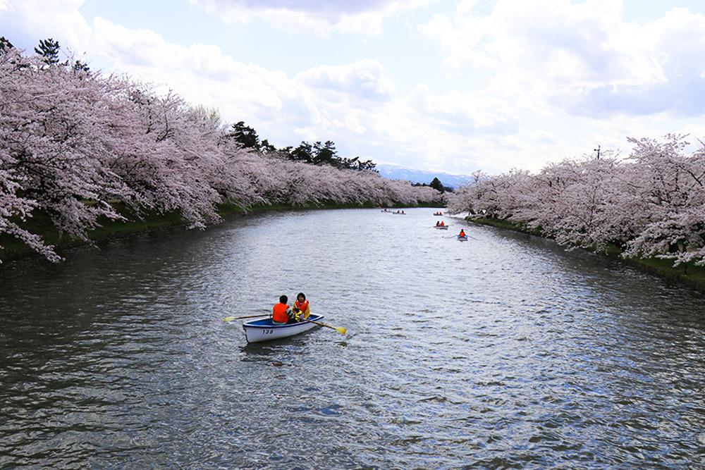 弘前公園 西濠の桜