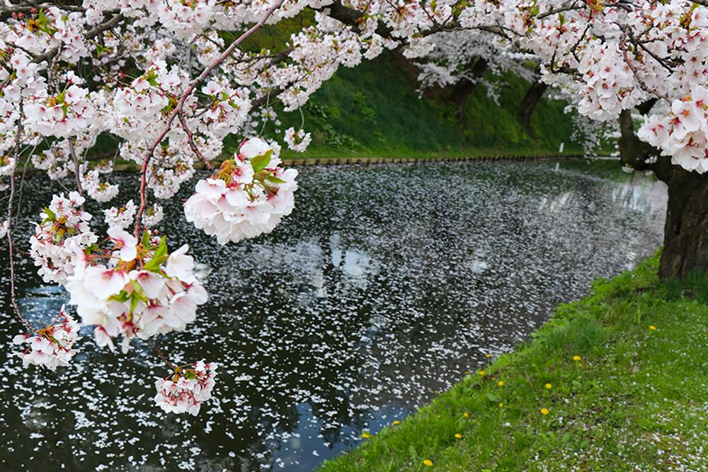 弘前公園 追手門付近の外濠