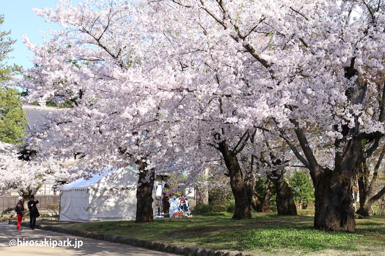 弘前公園 さくらまつり