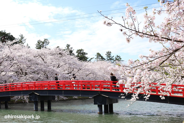 弘前公園の桜(2017)
