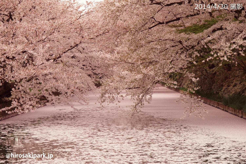 弘前公園花筏(はないかだ) 2014年