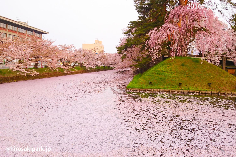弘前公園花筏(はないかだ) 2016年