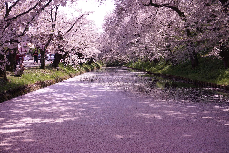 弘前公園 (2018年4月27日 撮影)