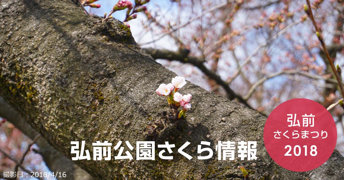 弘前公園さくら情報 2018 【弘前公園・弘前城】