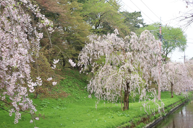 弘前公園 (2018年5月2日 撮影)