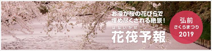2019さくらまつり 花筏予報(弘前公園)
