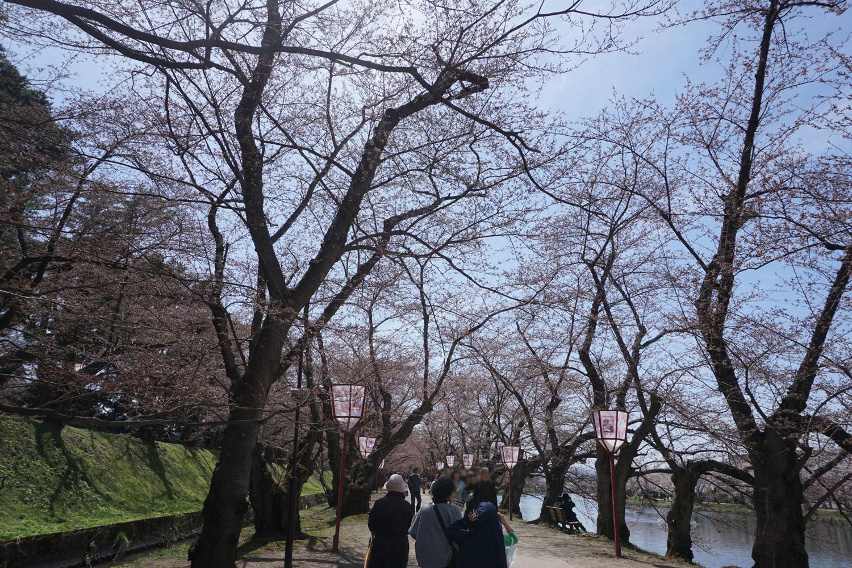 弘前さくらまつり 桜のトンネル