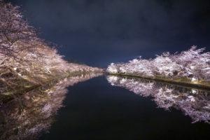 弘前公園 夜桜 西濠