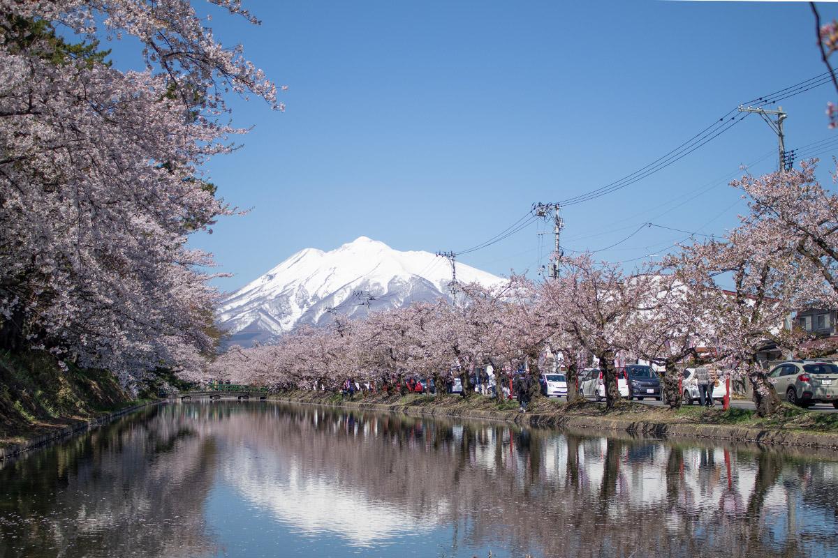 弘前さくらまつり 桜と岩木山