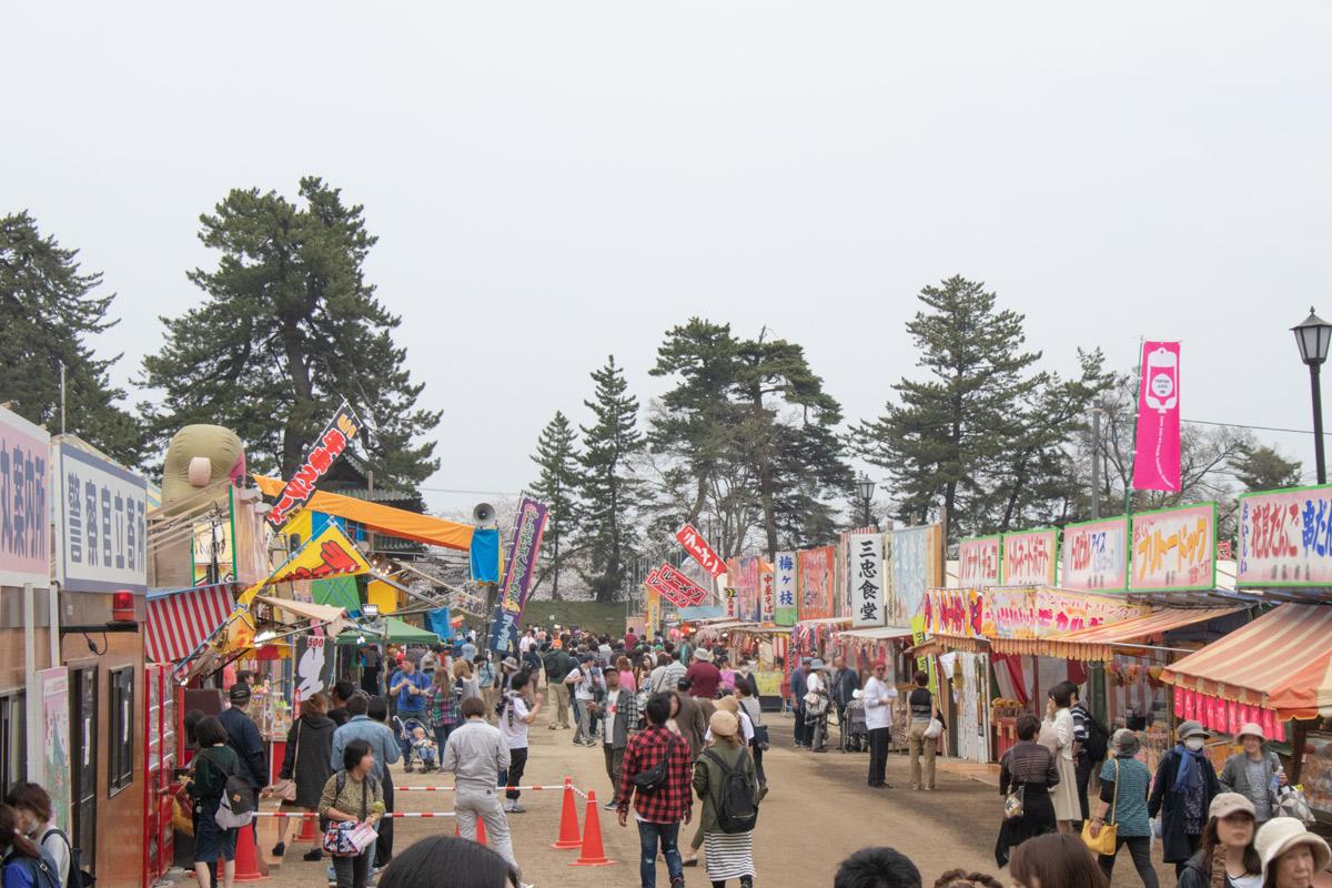 弘前さくらまつり 弘前公園最古のソメイヨシノ(二の丸)