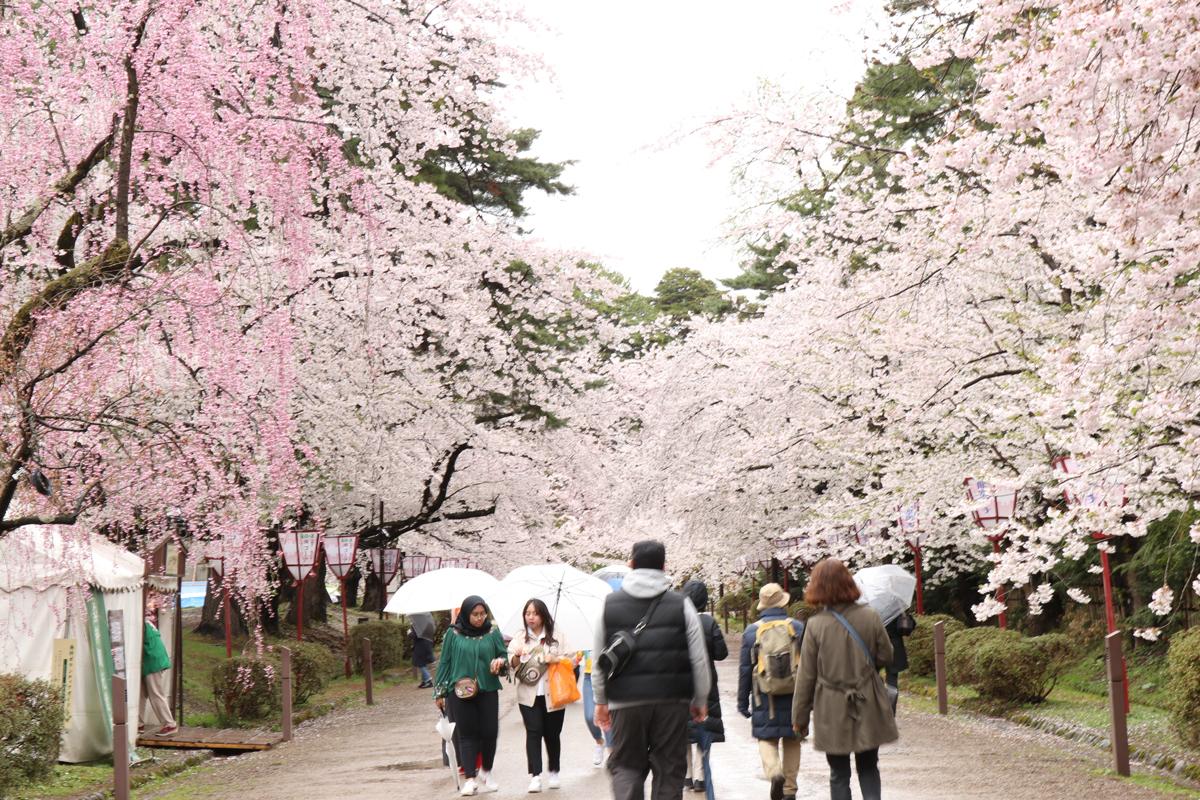 弘前さくらまつり 弘前公園の様子 追手門付近