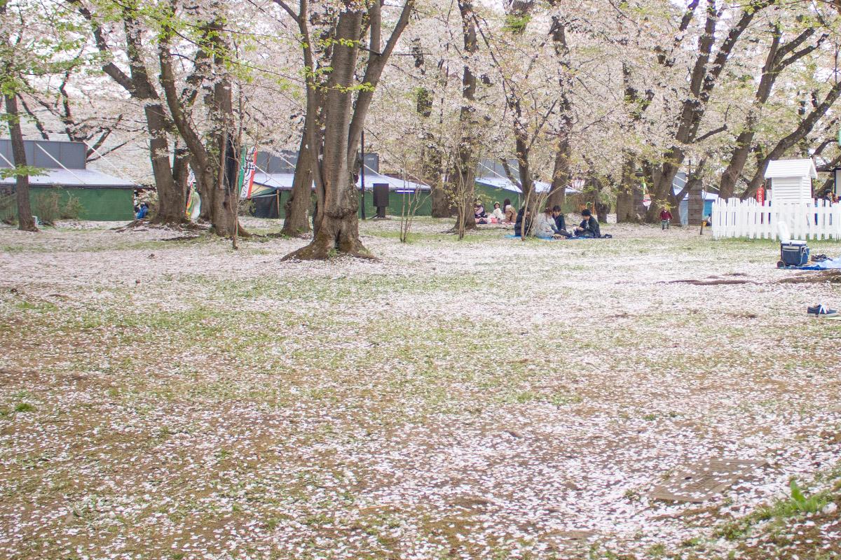 弘前さくらまつり ピクニック広場