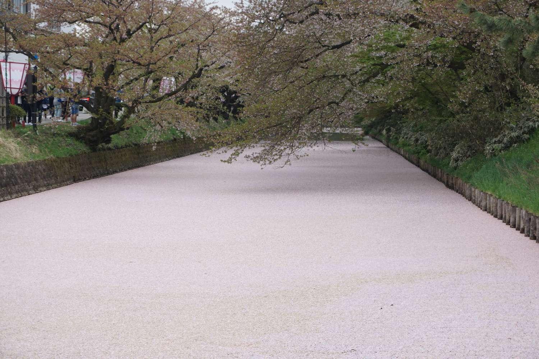2019年 弘前公園外濠の様子