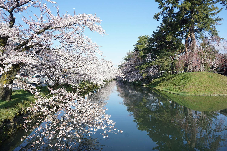 2020年弘前公園の桜 追手門前