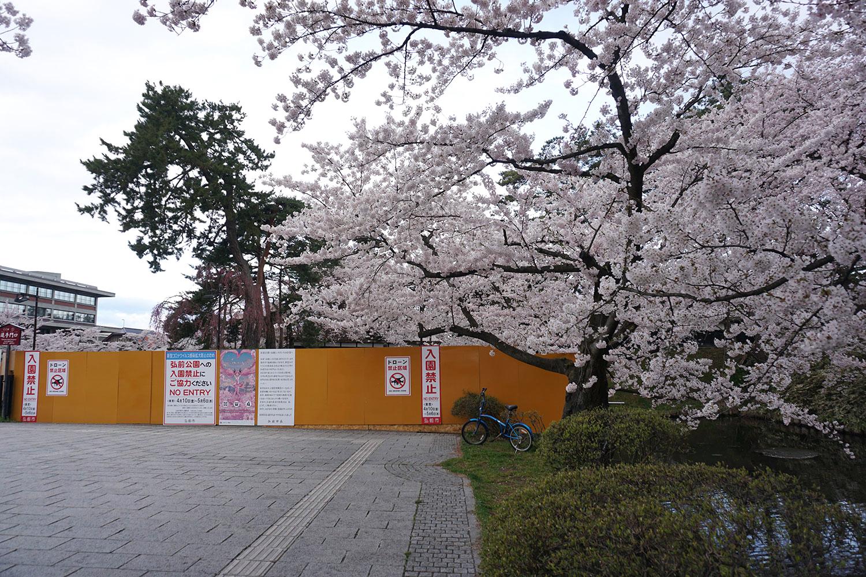 2020年弘前公園の桜 外濠