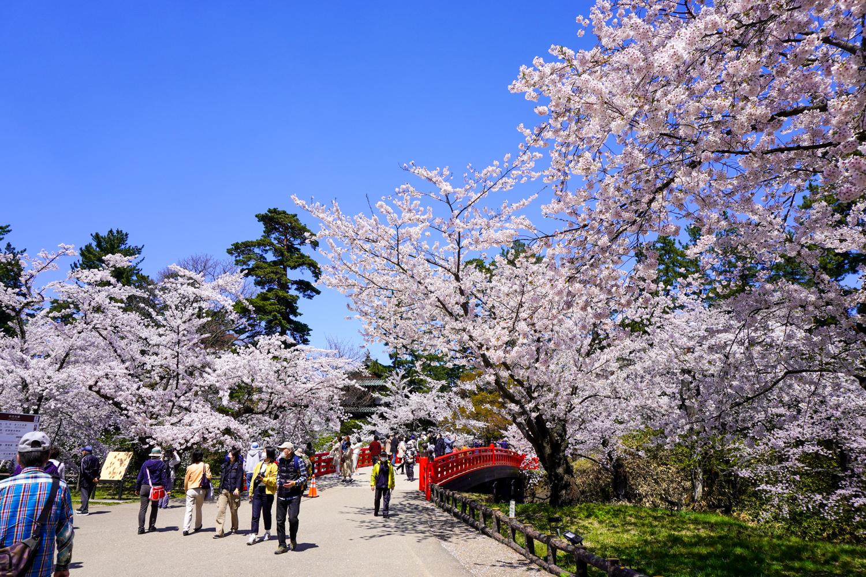 (2021年4月21日撮影)弘前公園 桜