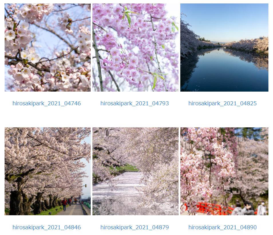 2021年の弘前公園の桜