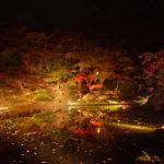2012年 弘前城菊と紅葉まつり