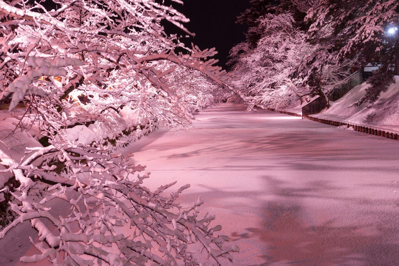 弘前公園 冬 桜