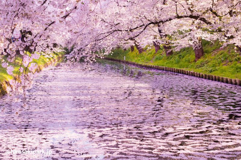 弘前公園 花筏