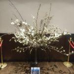 2019年3月20日~3月25日 東京・羽田空港JALラウンジにて弘前公園の桜展示