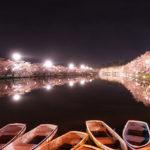 弘前公園 西濠 夜桜 ボート