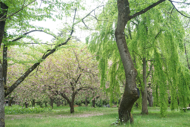 弘前公園 ピクニック広場