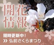 弘前さくらまつり2020開花情報・開花状況・開花レポートはこちら